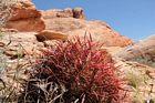 En röd kaktus.